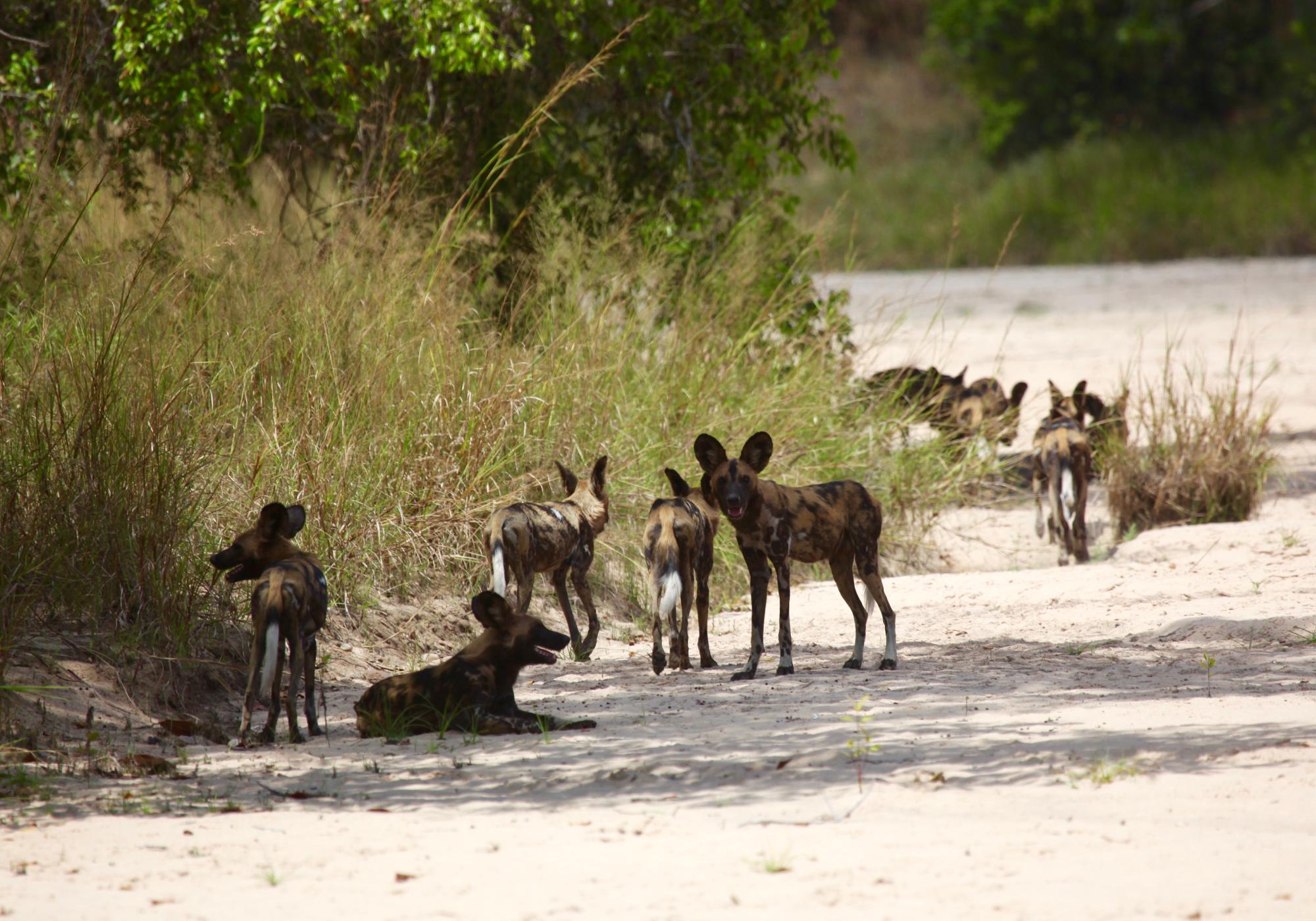 Tanzania-3